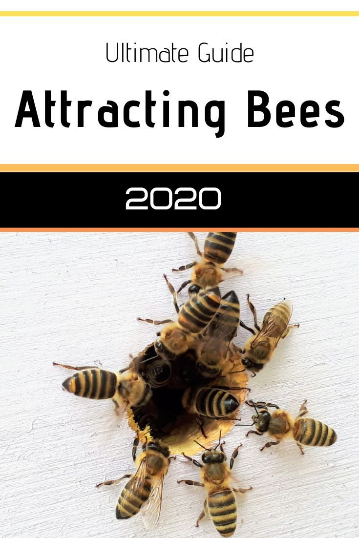 How to Attract Bees to Your Yard? in 2020 Attracting
