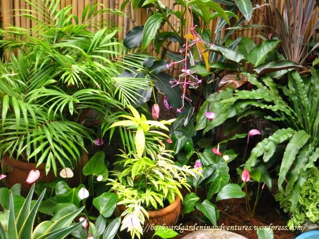 Ornamental plants pictures with names in the philippines for Landscaping plants in the philippines