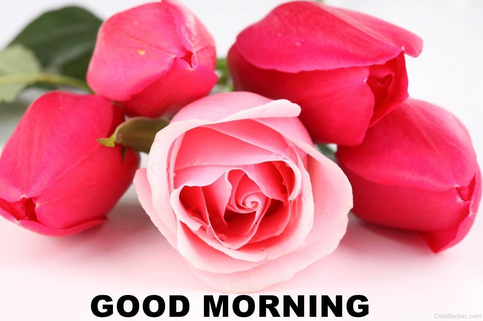 Những hình ảnh hoa hồng chào buổi sáng, những hình ảnh thay cho lời chúc