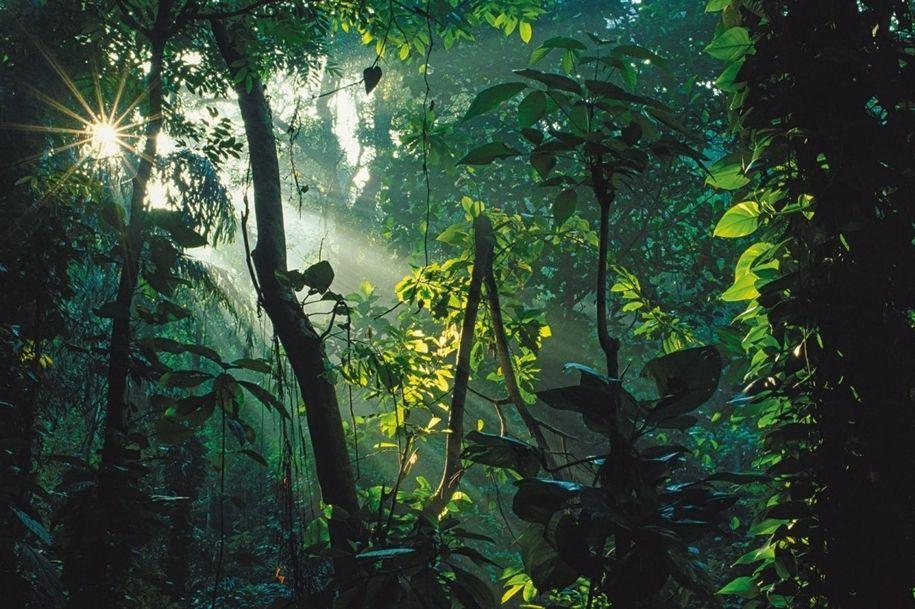 Картинки диких джунглей