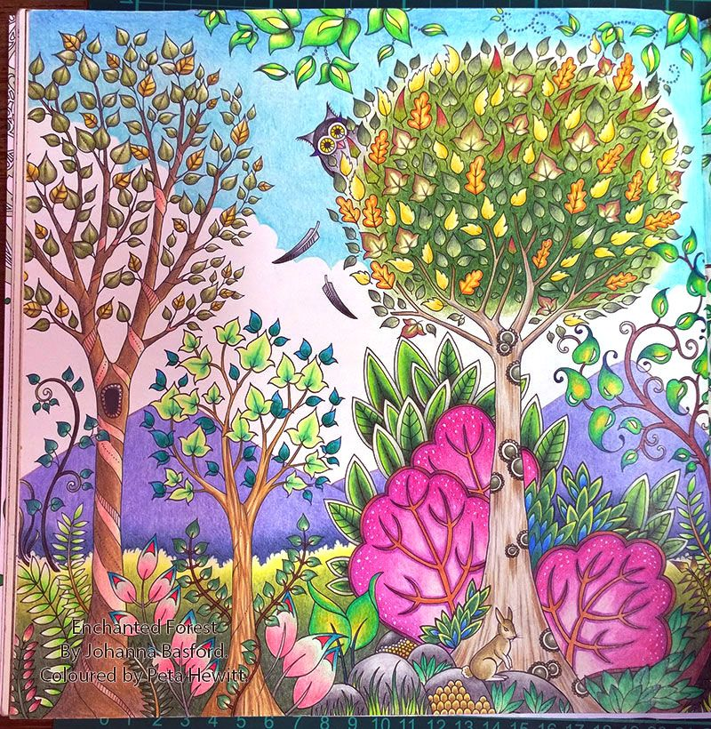 Enchanted Forest Stages In Colouring The Day Forest