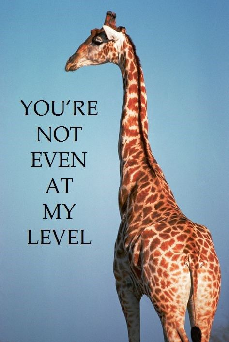 Funny giraffe cartoon meme - photo#33