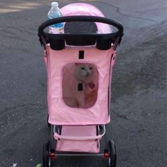 #Jane.com - #Day To Day Imports, Inc. Pet Stroller for Dogs & Cats - AdoreWe.com