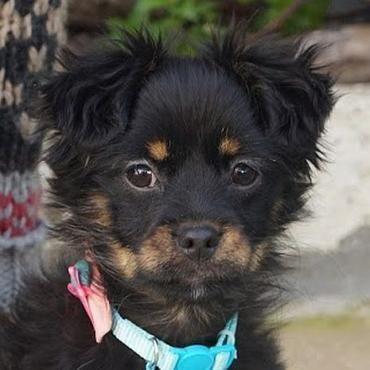 Pin Auf Hunde Vermittlung