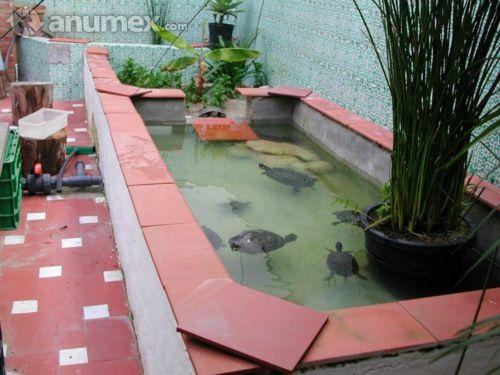 Compro tortugas de tierra o semi acuaticas cabello for Peceras para tortugas