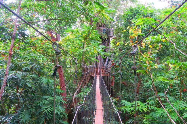 Canopy Walkway Savaii Island u2013 Samoa & Top 10 Things To Do In Savaii Island - Samoa
