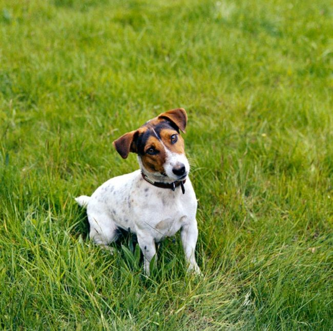 Small Hunting Dog Breeds Mix