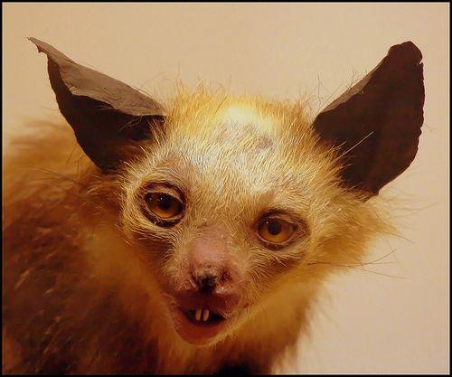 taxidermies danimaux horribles animaux pinterest