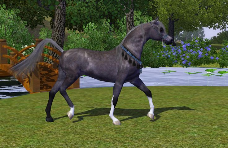 realistic horse breeds # 17