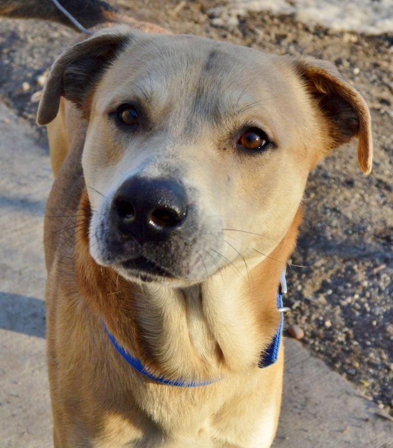 Adopt Congee On Shepherd Mix Dog Dogs Adoption