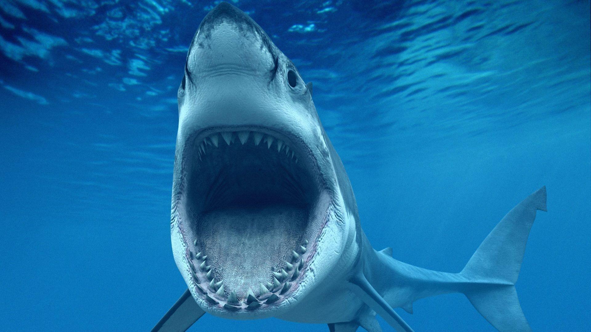 Niedlich Große Weiße Haie Malvorlagen Zeitgenössisch - Entry Level ...