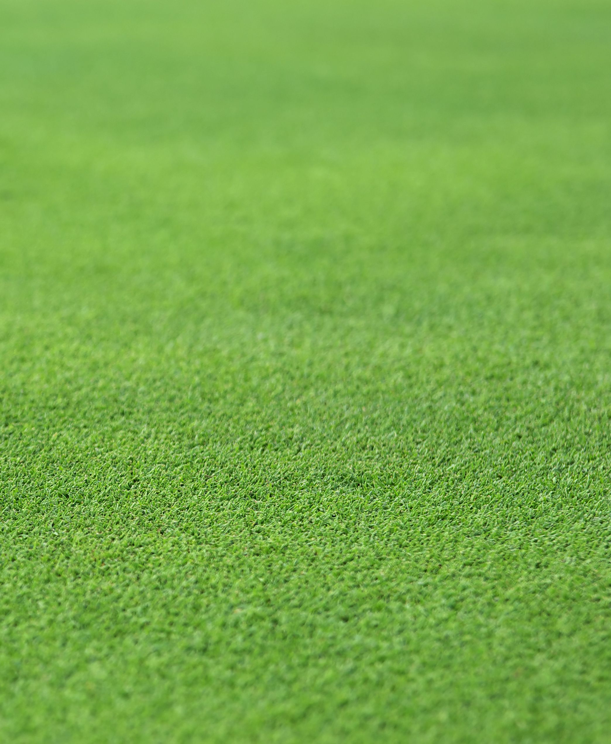 Stock photo of a perfect grass texture from a golf hole