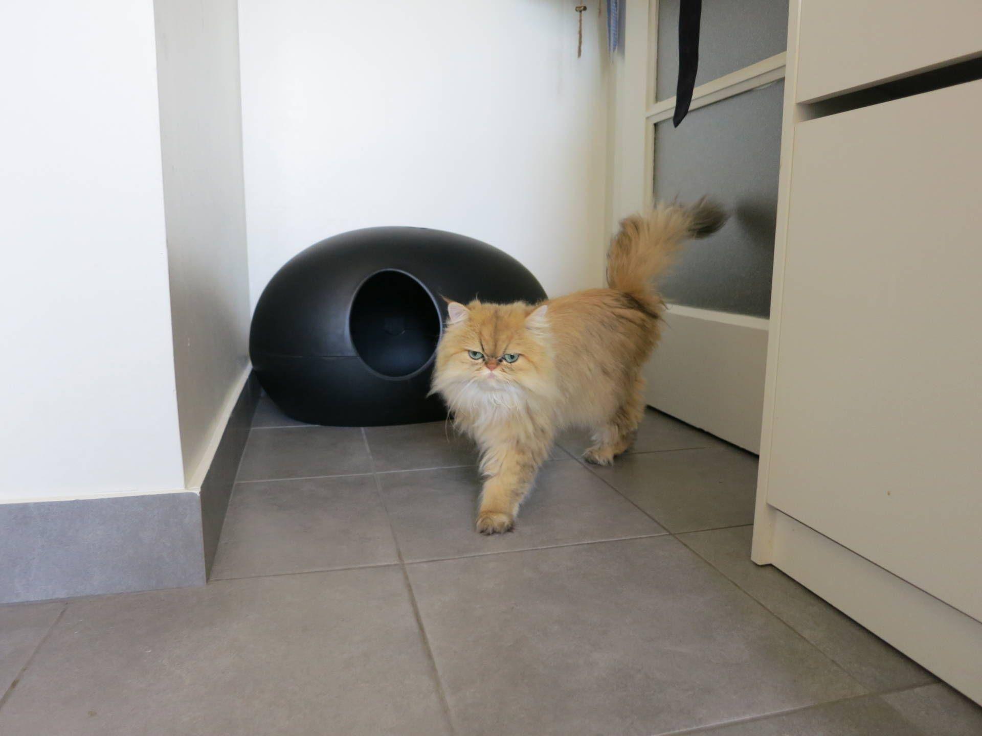 Poopoopeedo Litter Box Update Meow Lifestyle Litter Box Why Do Cats Purr Buy A Kitten