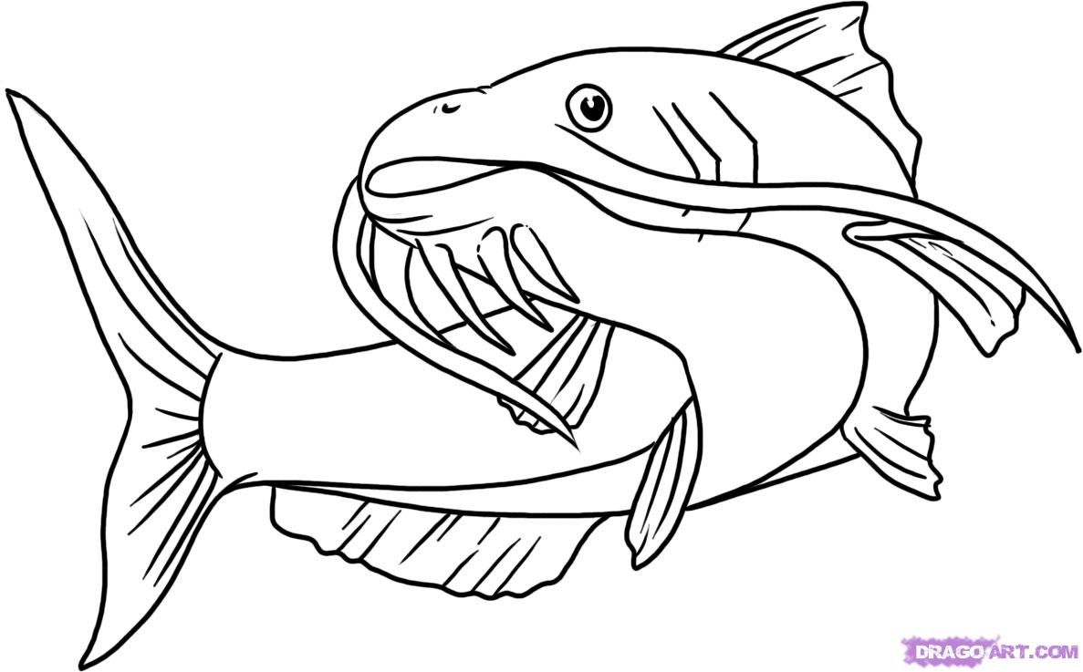 How To Draw A Catfish Step 5 1 000000015642 5 Jpg 1187 737 Blue Catfish Drawings Catfish