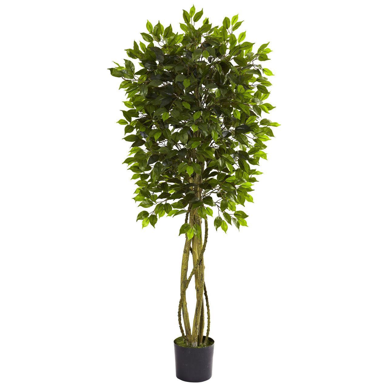 Poinsettia candelabrum ficus tree silk tree and ficus