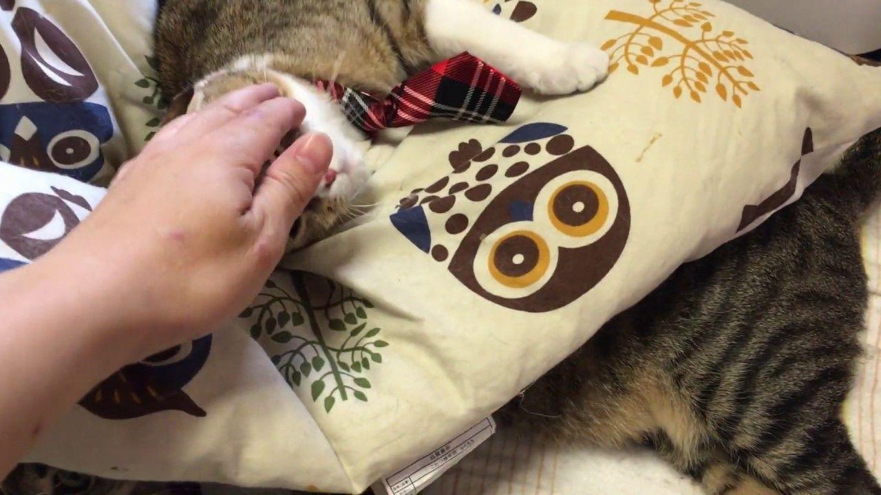 あいちゃん重いよw【かわいい子猫のおもしろい動画】