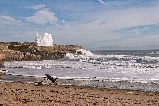 Lighthouse Point Dog Beach In Santa Cruz Ca
