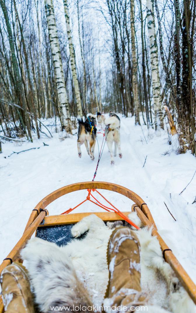 Photo of Video + Photos: Husky Sledding in Finland