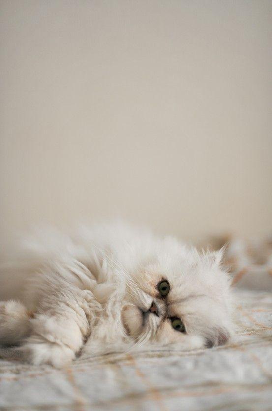 Adorable Cat Cute Animals Pretty Cats Pets