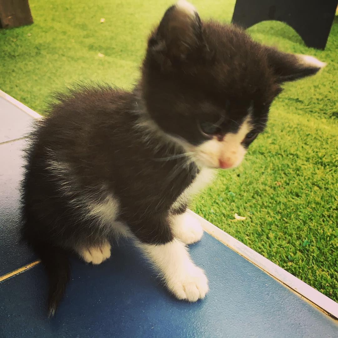 #통영카페 #통영 #캣스타그램 #고양이 #catstagram #cats #cat #animal #아깽이 #턱시도고양이 #코숏 #커피랑 #고냥이 #춘수  뭘보냐옹?? by doggledoggle