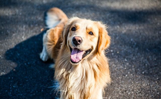 11 Reasons Why Your Rescue Dog Actually Rescued You Dogs Golden