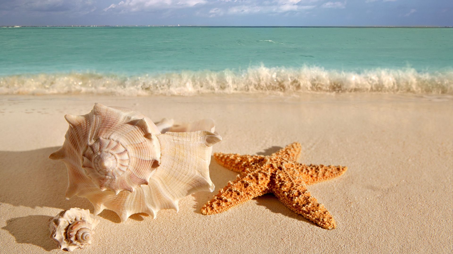 Google Image Result for http://wallpaperdreams.com/wallpapers/seashells_and_a_starfish_in_close-up_on_a_beach_in_front_of_the_sea.1920x1080.c462e4d8.jpg