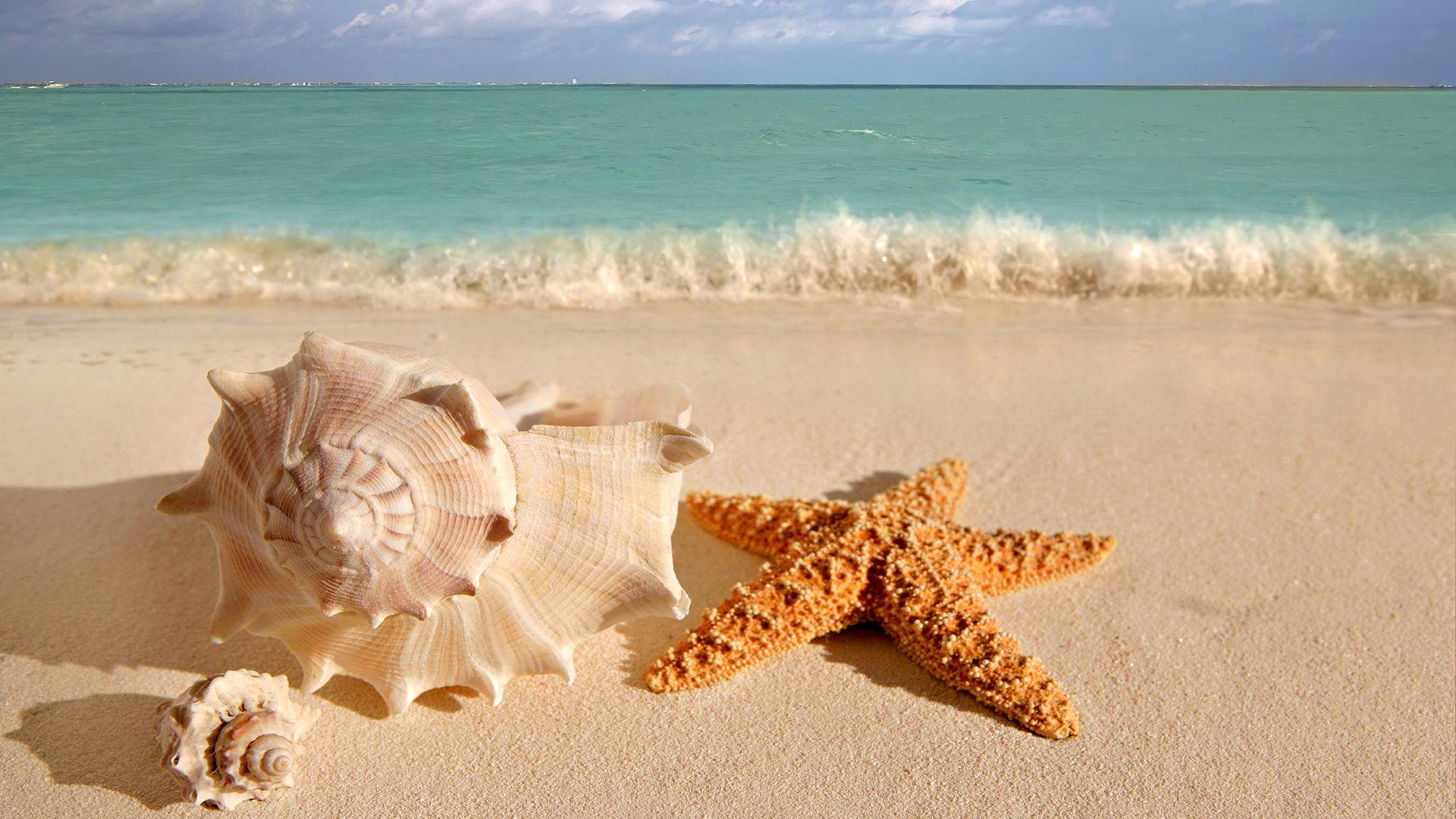 Like Snowflakes No Two Are Alike Conchas Sfondo Spiaggia