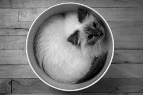kitty cat 4 Daily Awww: Kitty cat cuteness (22 photos)