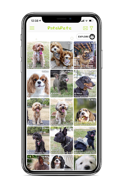 Patchpets Australian Social App For Dogs Australian Dog Lover Dogs Dog Parents Dog Lovers