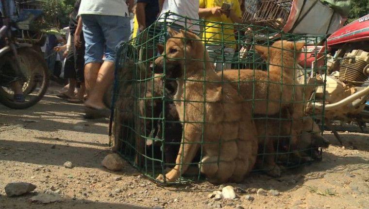 El órgano legislativo de la isla aprobó el martes una histórica enmienda a sus leyes de protección animal.