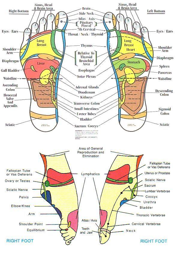 Reflexology Chart Head To Feet Reflexology Foot Chart Reflexology Reflexology Massage Reflexology Foot Chart