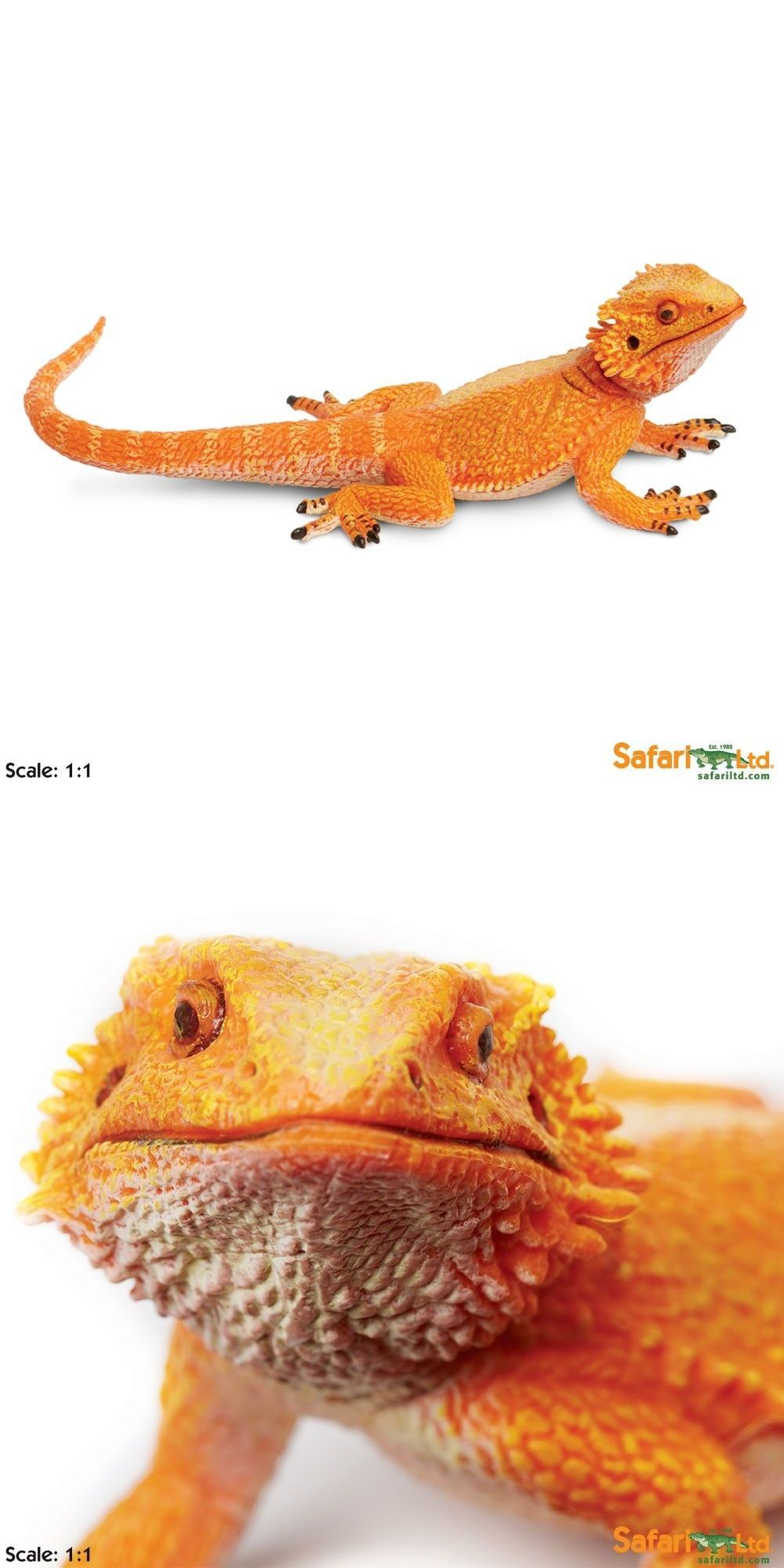 50cc8023597 Educational 11731: Bearded Dragon Incredible Creatures Figure Safari ...