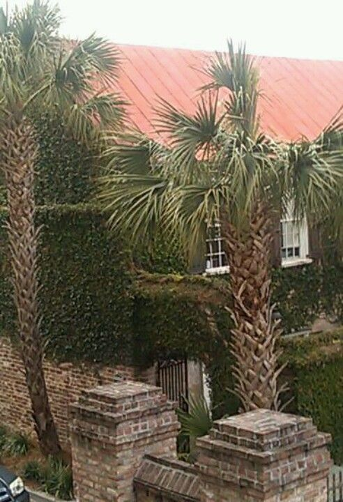 Love everything in dowtown Charleston! Palms, red metal rooftop, ivy walls.