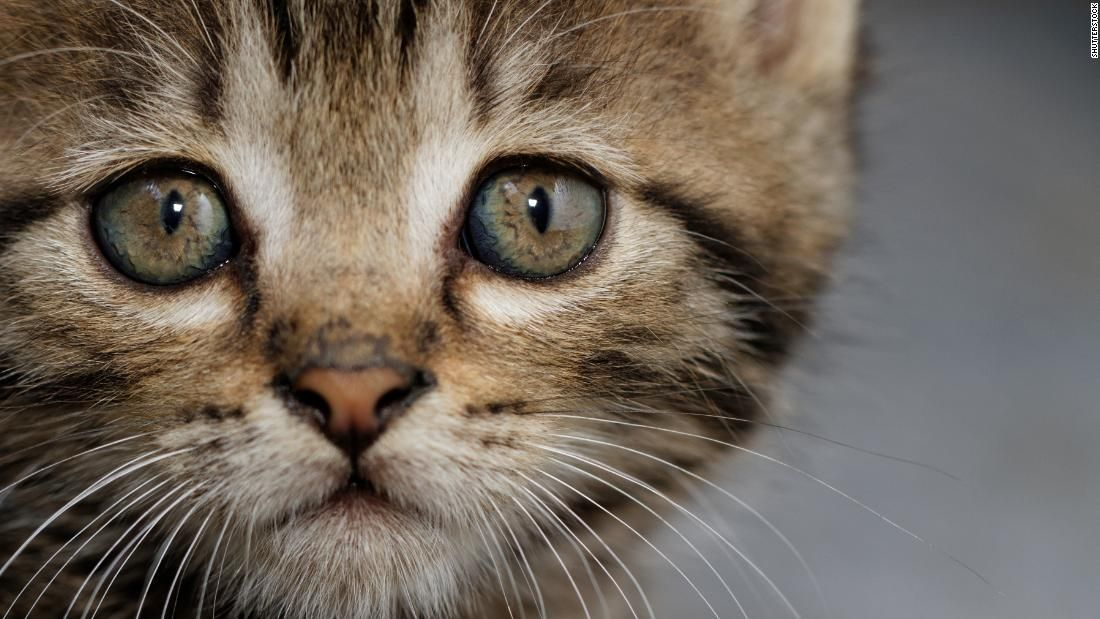 There's absolutely no reason to declaw your cat (opinion