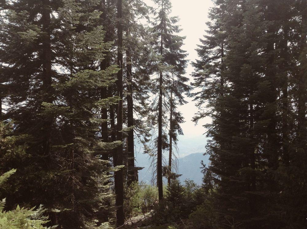 Yosemite — Kate Lynn Photo