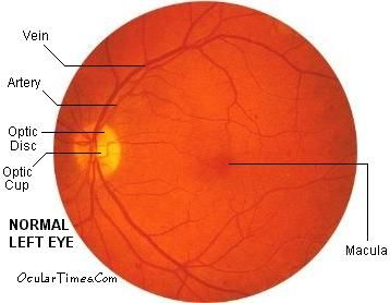 Examination of the internal structures of the eye.   Assessment ...