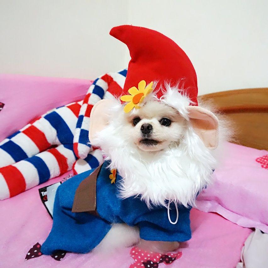 Dog Costume Dwarf Halloween Dog Costume Pomeranian Puppy