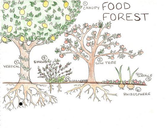 Forrest Garden Design