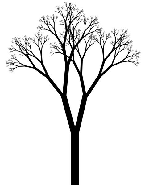Cool Tree Black And White: Dojo-Fractal-Forest/Organizer-Notes.md At Master