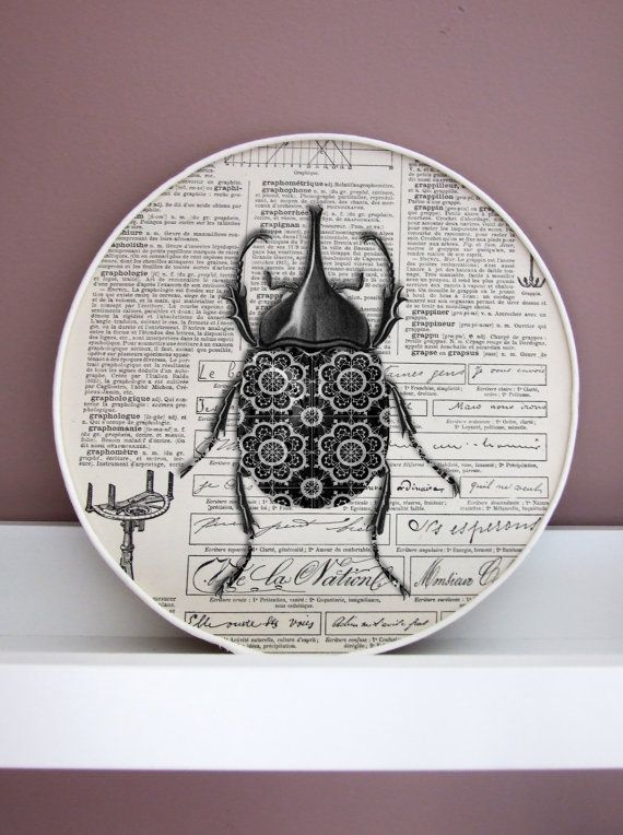 Best Insect 3D Collage Scarabee Paris Larousse Encyclopedia 400 x 300