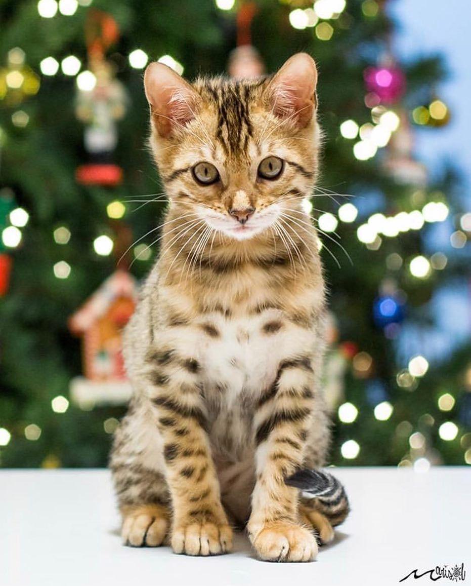 Presents Marisol Fotos Congratulations Thanks For Sharing Follo Cute Cats Kittens Cutest Pretty Cats