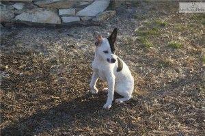 Free Pitbull Puppies In Huntsville Alabama