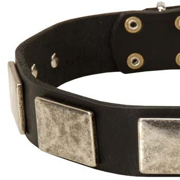 Extraordinary #Leather #Dog #Collar with massive nickel plates will make your large breed canine look magnificent! $39.90