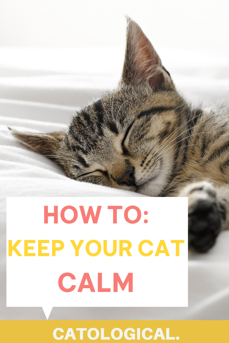 How To Calm Down Your Cat Cats Cat Advice Cat Quotes Funny