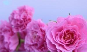 tutoriel roses en crépon