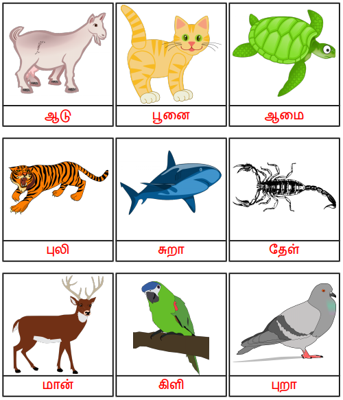 Flashcards - விலங்கு பெயர் - 2 எழுத்து Keywords:playingtots,playing  Tots,playin… Kids Worksheets Printables, Kindergarten Reading Worksheets,  Kids Math Worksheets