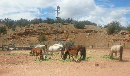 SPEAR T Horses 2013