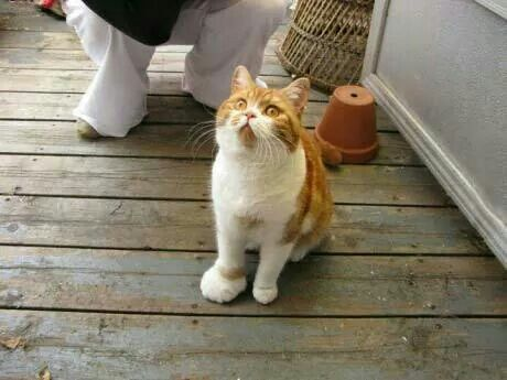 when a cat play with a bee
