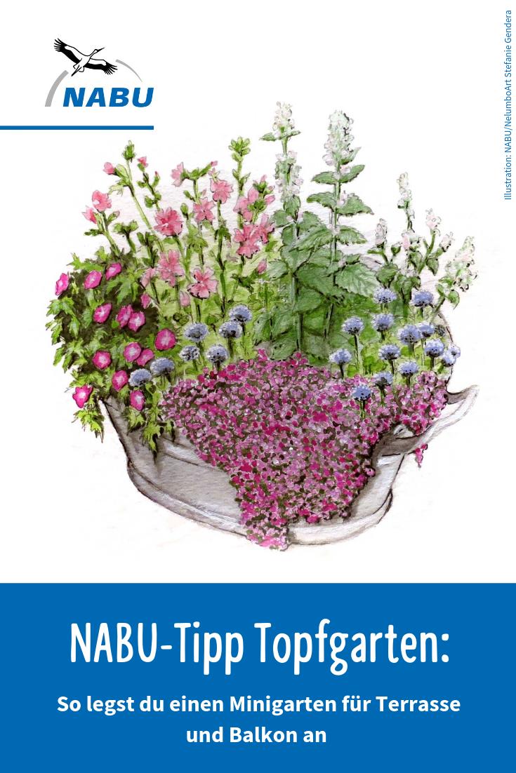 NABU Tipp Einen Topfgarten anlegen   Garten anpflanzen, Garten ...
