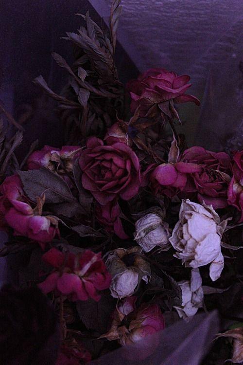 Dreamingviolet Just Love The Colors Dark Flowers Dark Floral